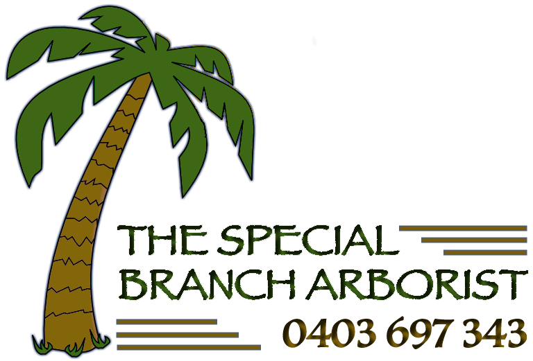 The Special Branch Arborist