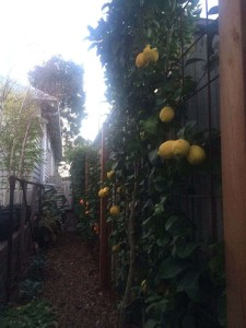 Fruit Tree Pruning Melbourne