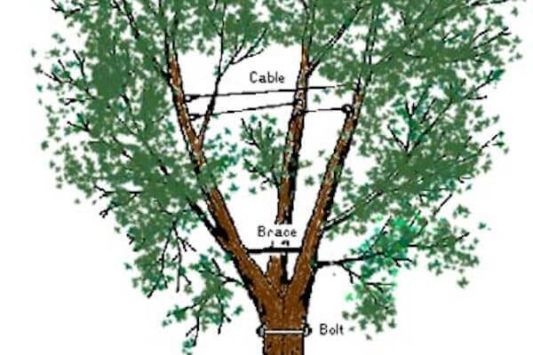Cabling and Bracing Melbourne