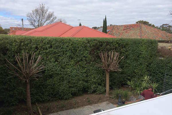 hedge trimming Melbourne